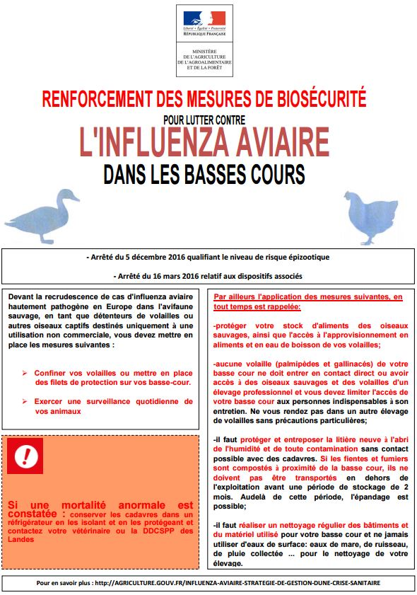 Influenza aviaire biosecurite
